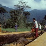"Tuxtlas community (""ejido"") members sawing rainforest logs for lumber."