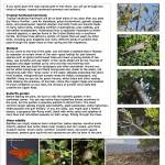 natural history panel (click to enlarge)